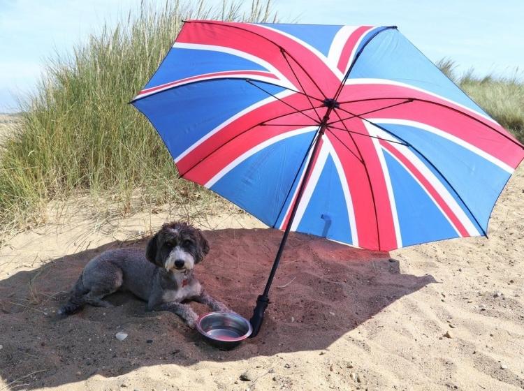 Vroče poletje: Kako pomagati domačim živalim?